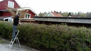 Häckklippning Bandhagen