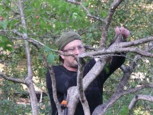 klippa fruktträd