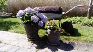 plantering gräsmatta
